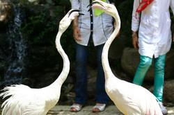 Tehran Bird's Heaven