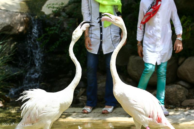 Tehran Bird