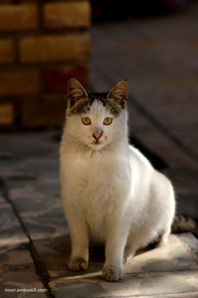 گربه خونه