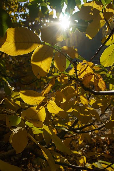 پاییز 99