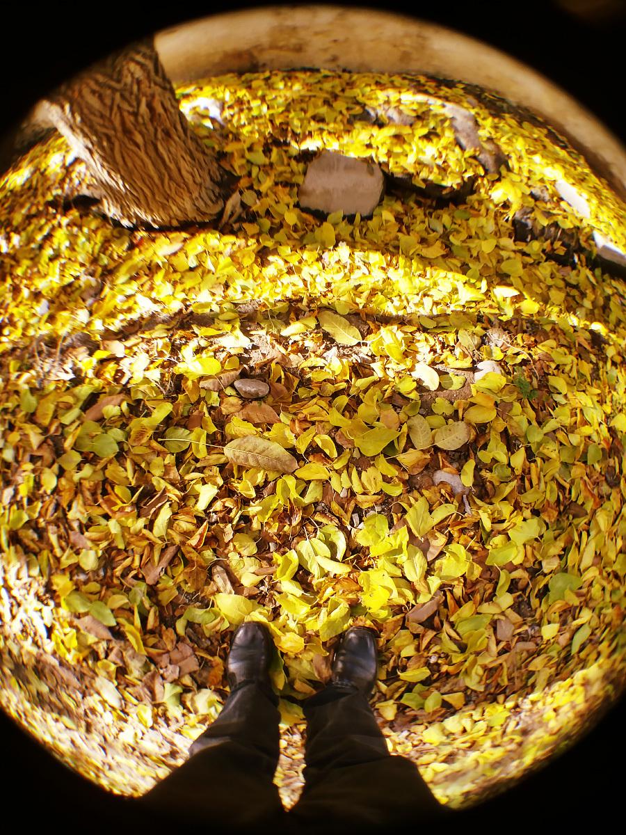 پاییز گرد