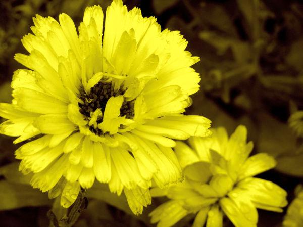 Mellow yellow.