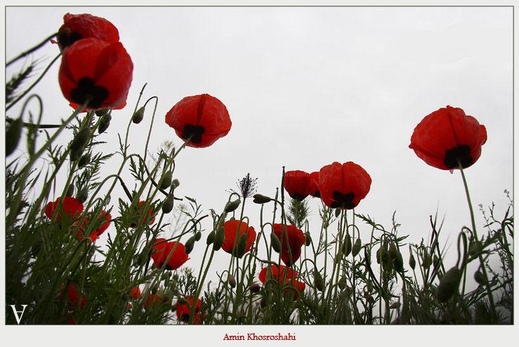 love flower spring rain