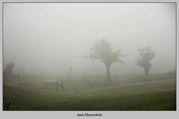 horse of dream