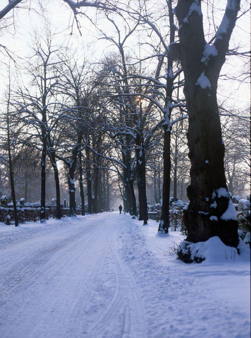 Snowy Munich 2010 #3