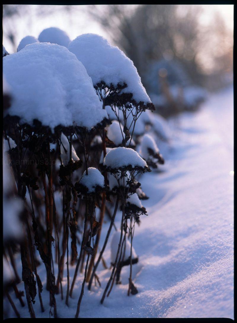 Snowy Munich #4