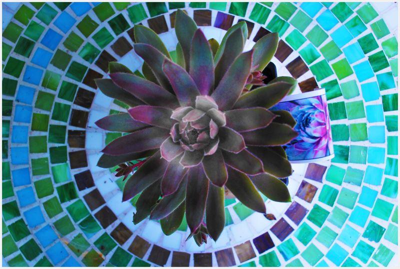 Circular logic gets you a flower