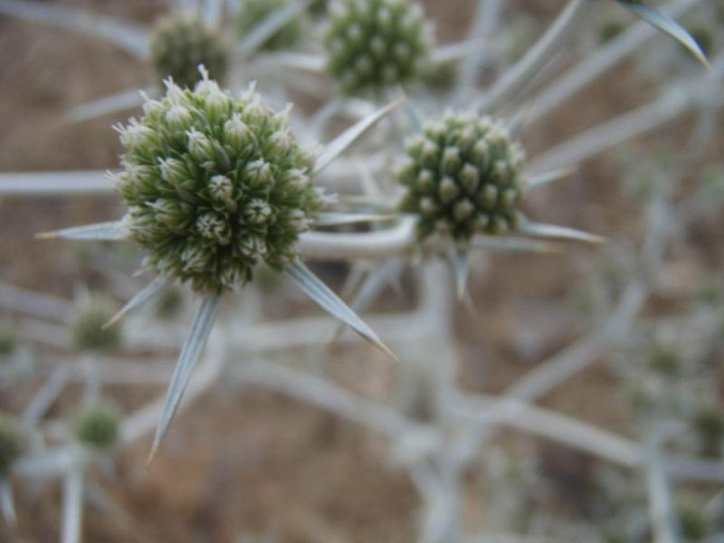 Artistic plant