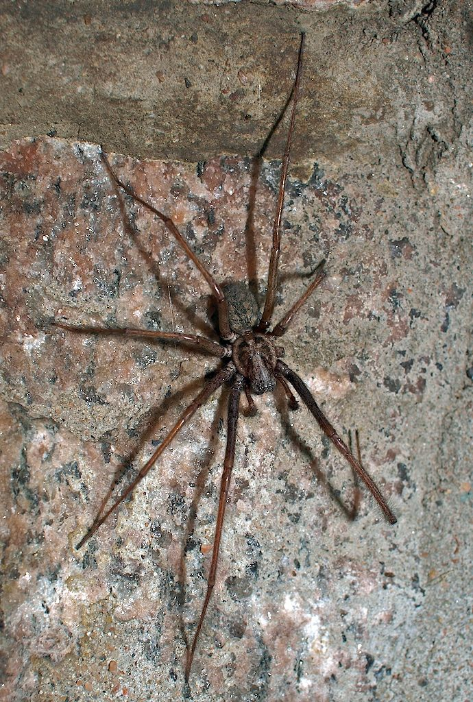 Spindel på stengrunden vid källardörren