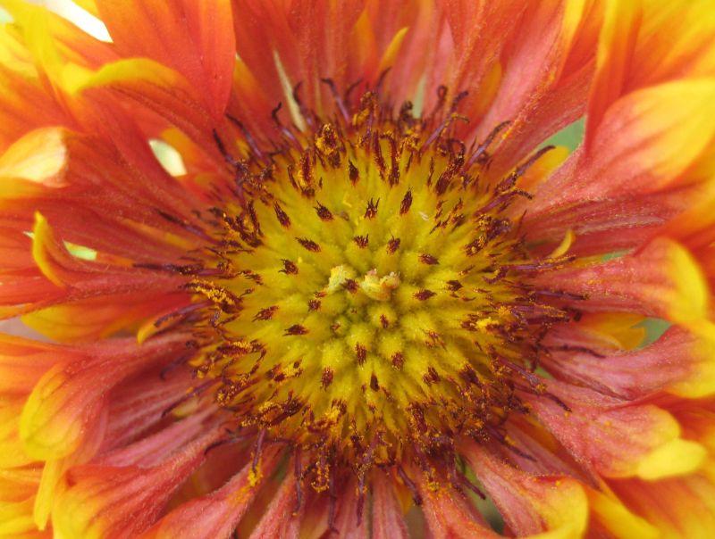 Flower in garden outside home.