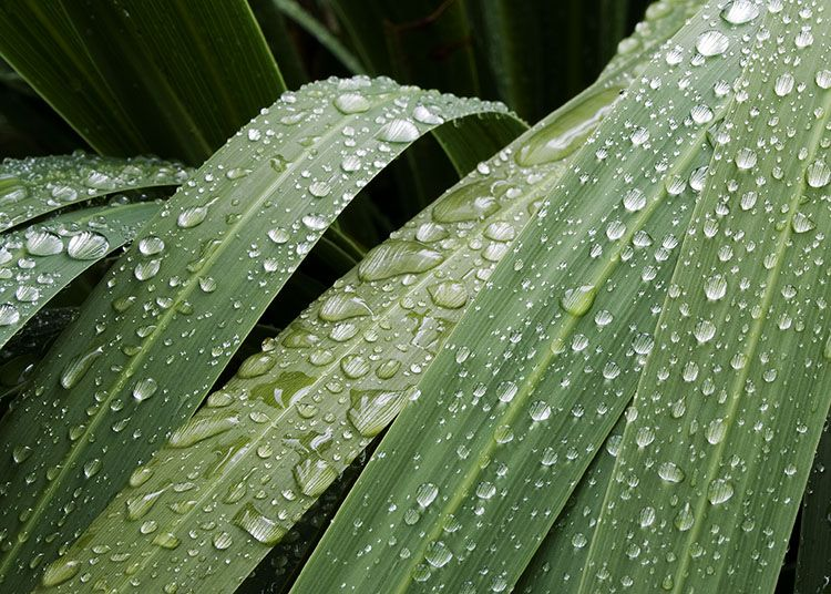 raindrops on tropical leaves