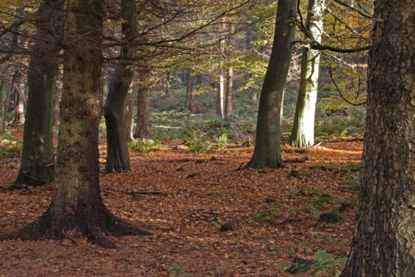 Autumn woods in the Lake District