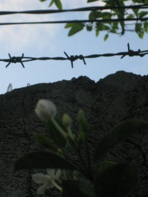 Flower and barbed wire
