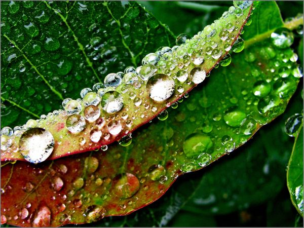 dropsdrops leaf rain