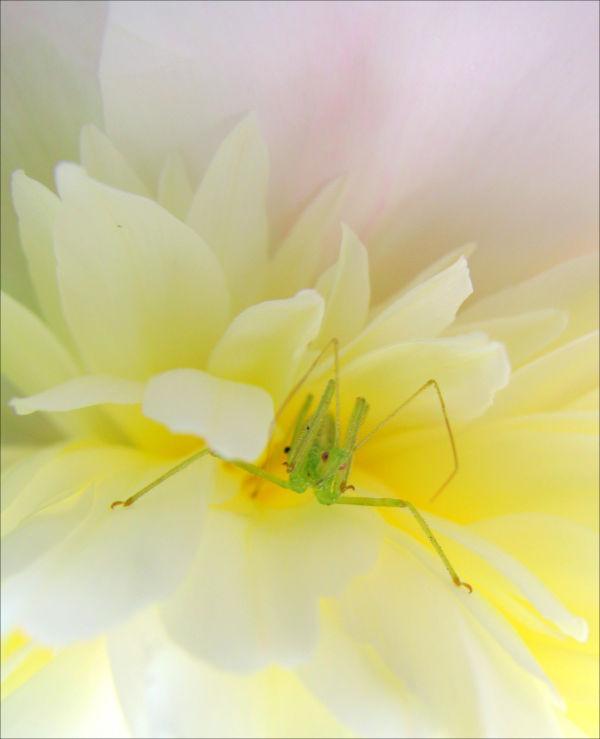 Jim's garden flower
