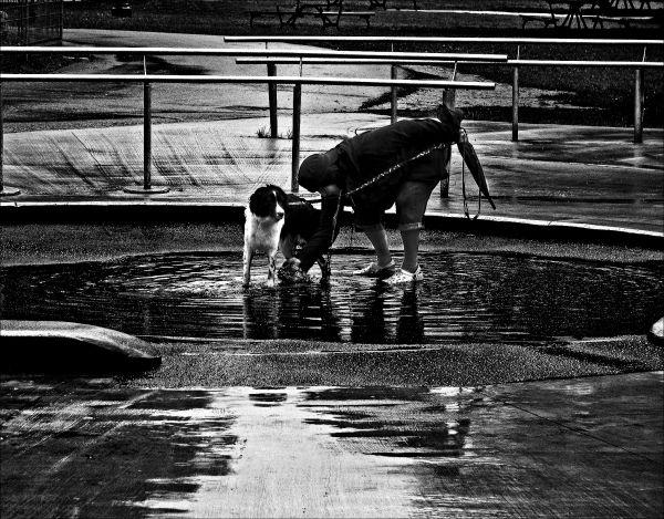 Dog Splash- Spray-Bath