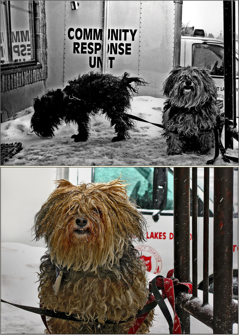 The Litle Dogs' Day
