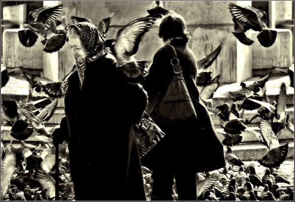 Among the Pigeons