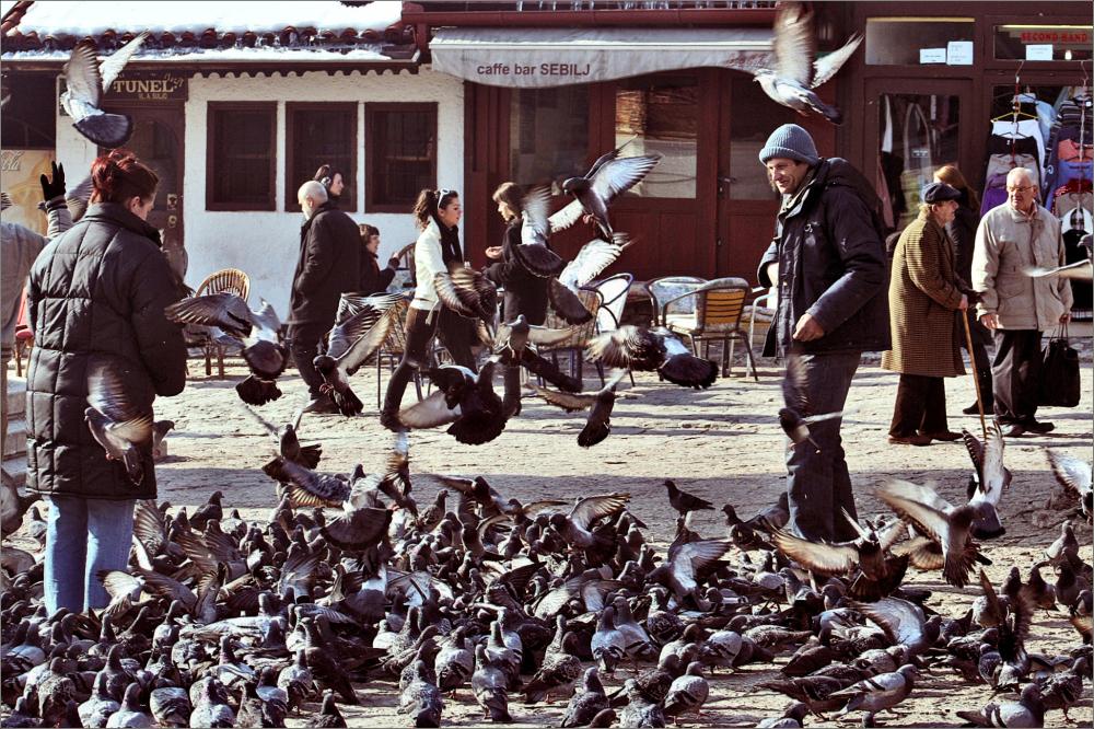 Pigeons from Baščaršija