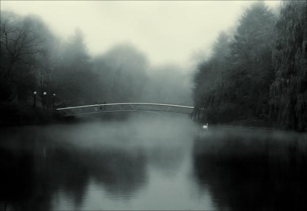 Morning in Fog