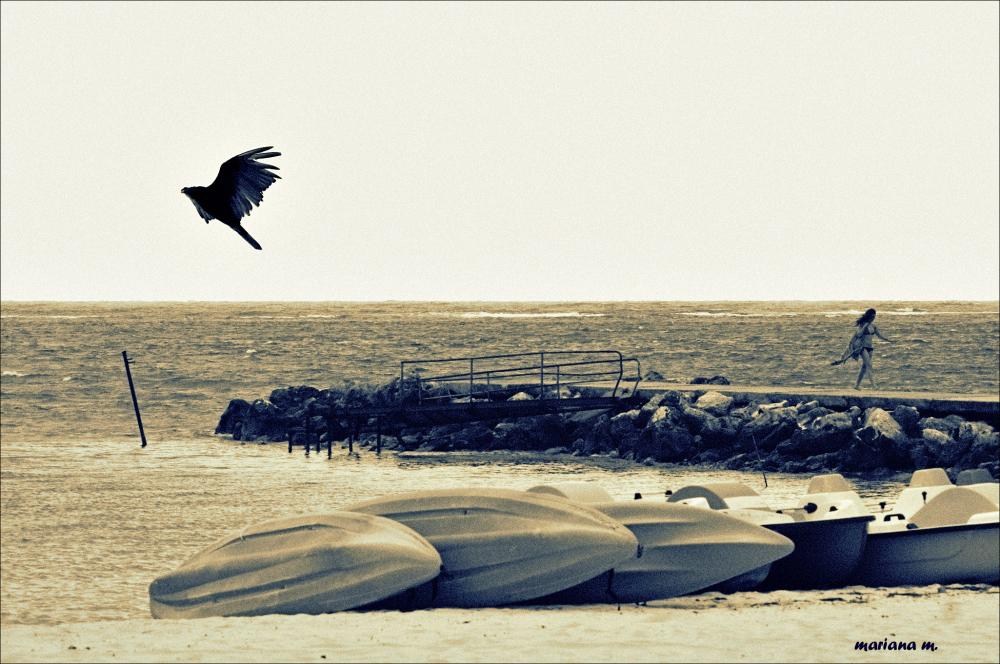 Bye-Bye Blackbird !