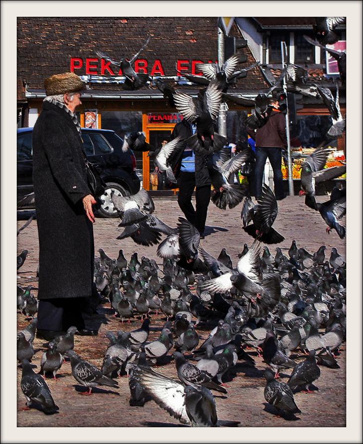 Pigeons of Baščaršija