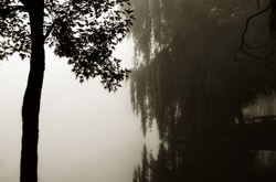 Foggy Morning in Victoria Park