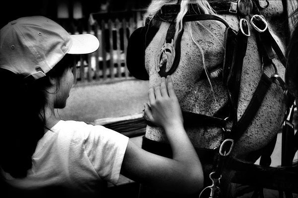 Girl Touching Horse