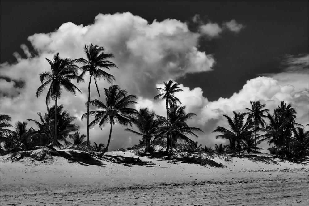 puntacana palms