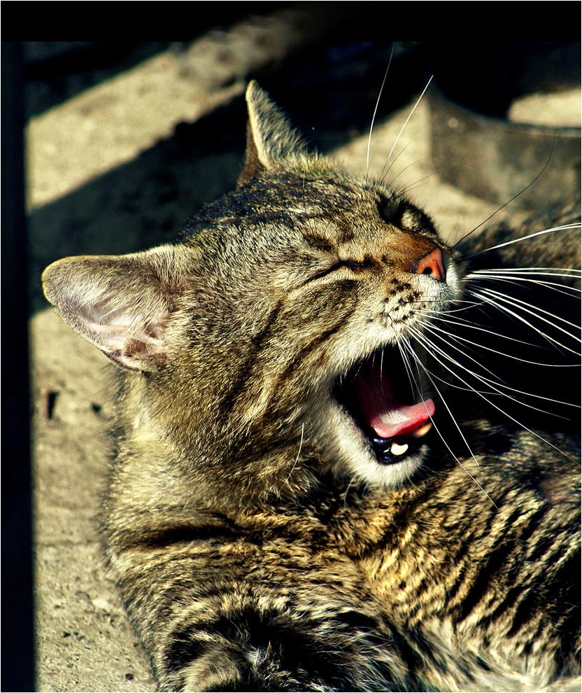 Cat Marko