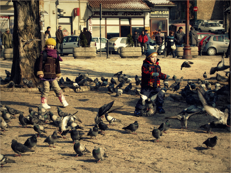 Kids and Pigeons