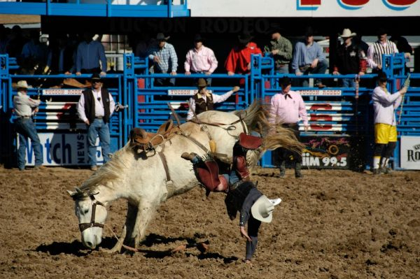 Rodeo horse throws his rider off in Tucson