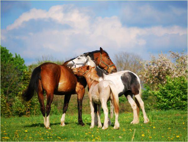 horses caressing