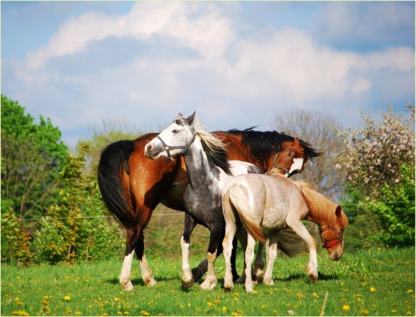 horses in move