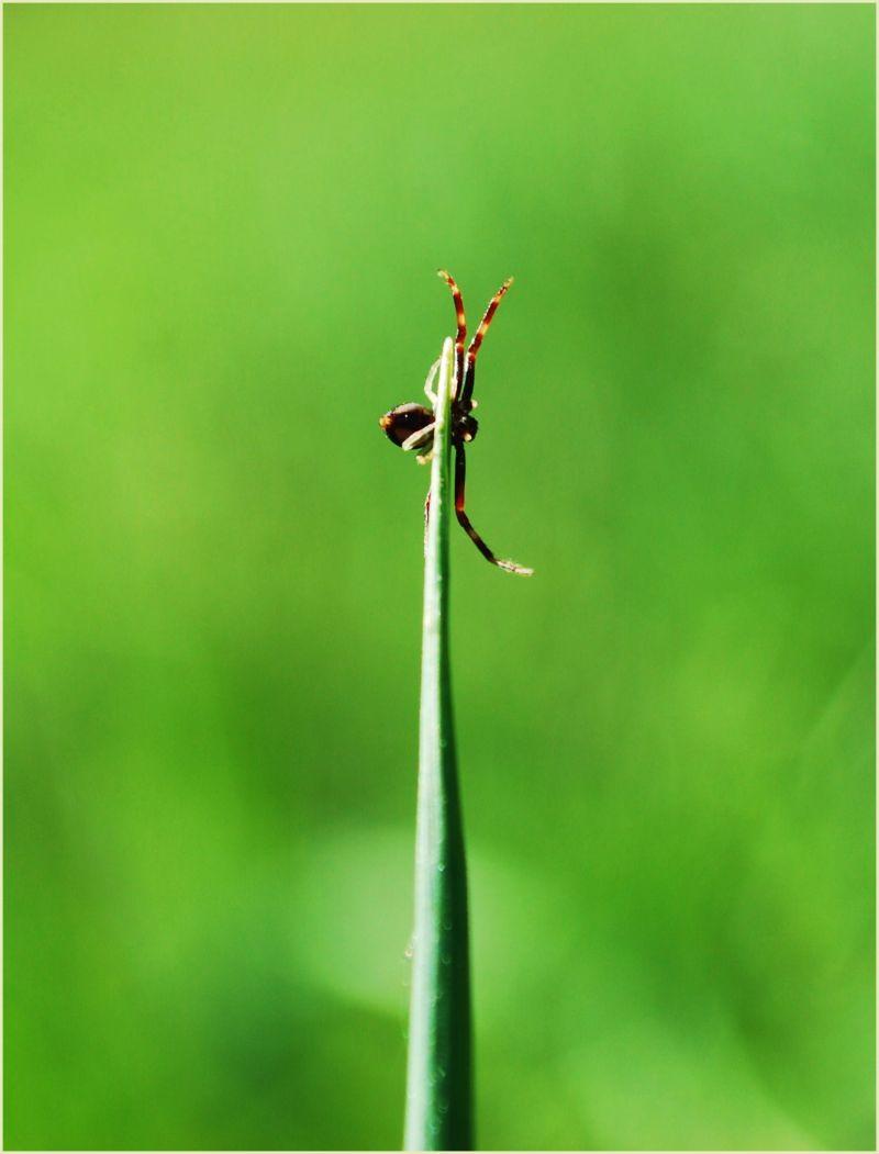 spider on a grass stalk