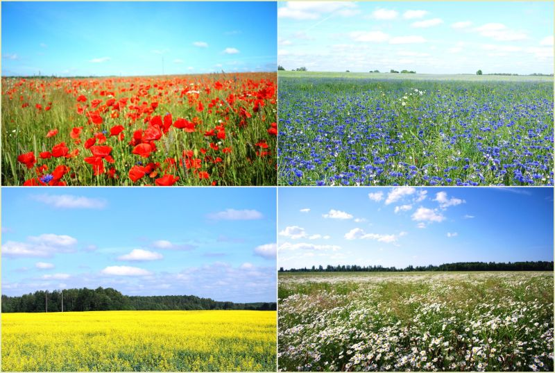 colourful flower fields