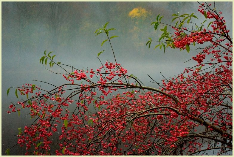 autumn berries by river