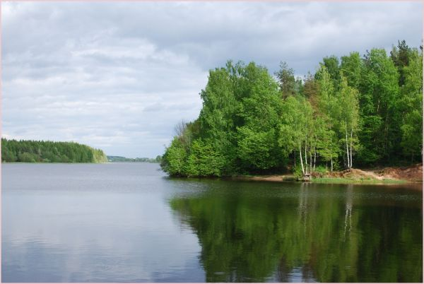 daugava with birch trees