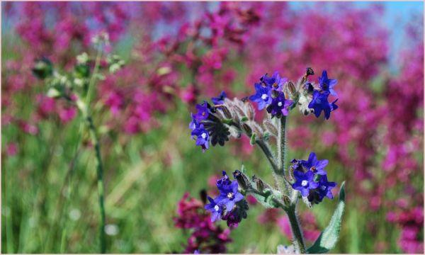 flowers in latvia