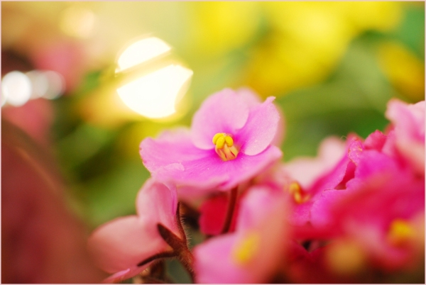 pink flowers and light ball