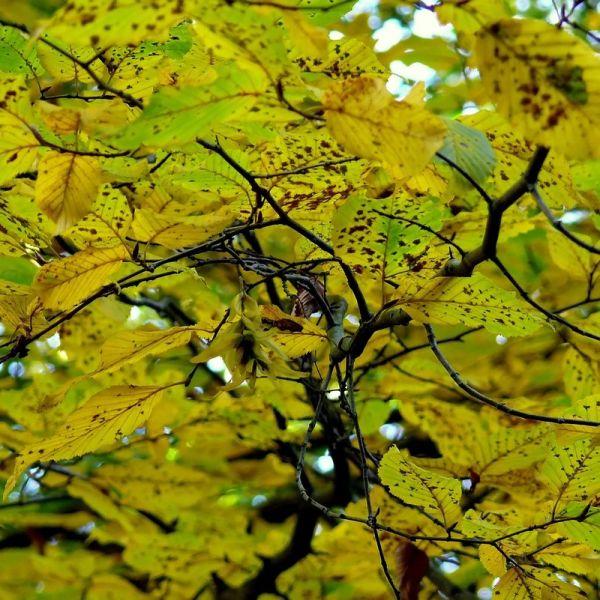 Percer l'automne