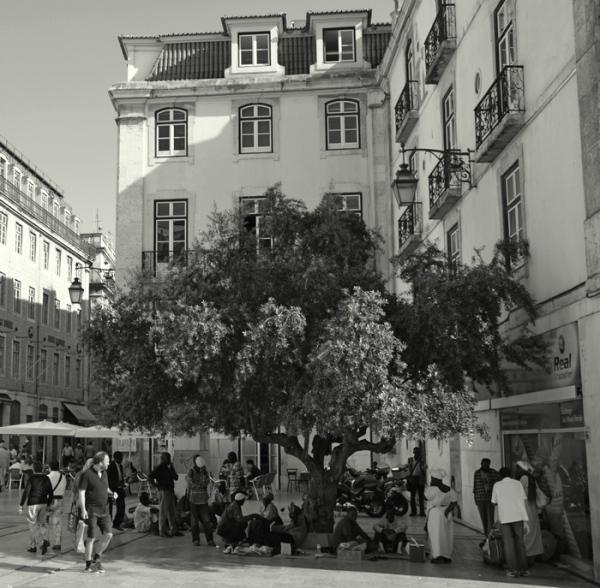 Sous l'olivier de la Tolérance