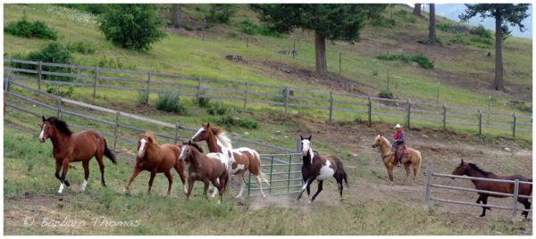 Ranch Horses