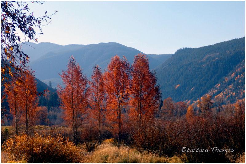Autumn in Aspen