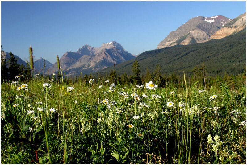 Wildflowers, Alberta, Canada