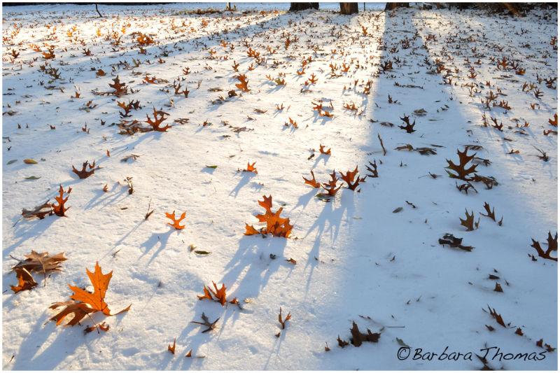 Snowing Leaves