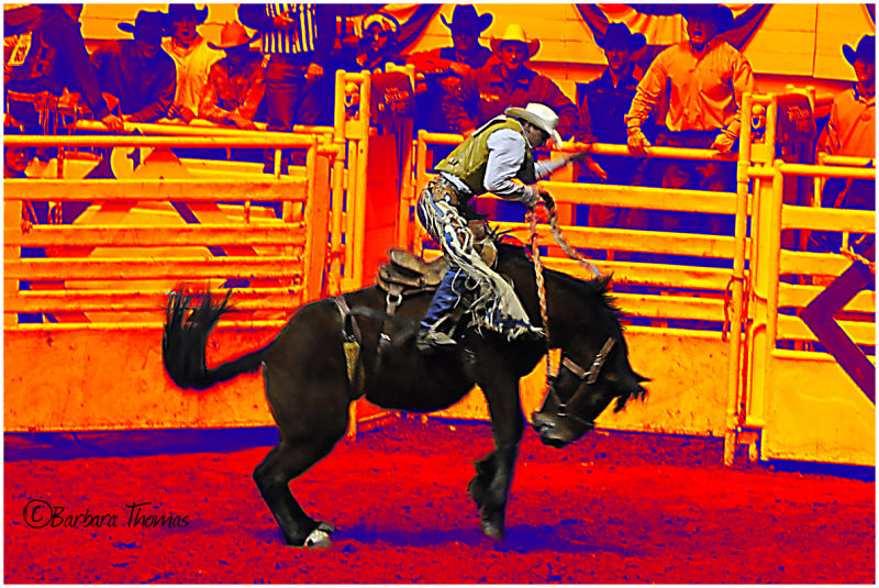 Rodeo Dreamin