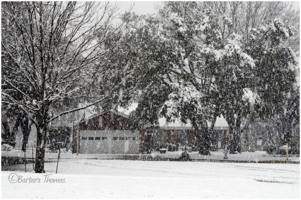 Texas Snow!!!