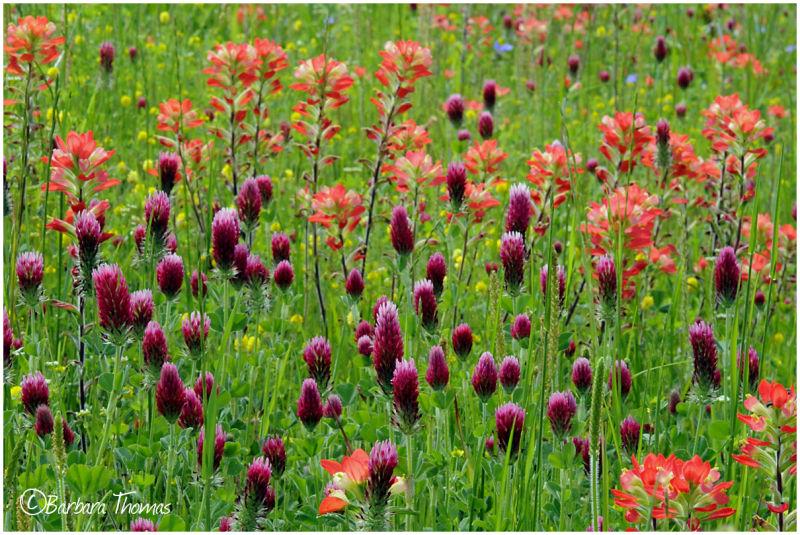 Highway Wildflowers