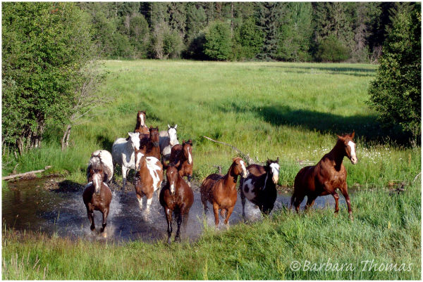 Paradise Where Horses Go